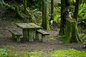 Bench in Mossy Forest — Stock Photo