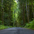 Road Through Deep Forest — Stock Photo