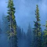 Постер, плакат: Fog in Forest