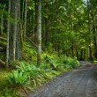 Deep Forest Road — Stock Photo