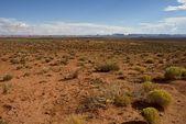 Northern Arizona Desert — Stock Photo
