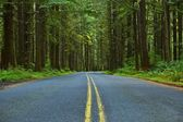 Mossy Forest Road — Stock Photo