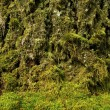 Stock Photo: Mossy Nature Background