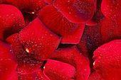 Sfondo di petali rossi — Foto Stock