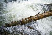 Woedende water — Stockfoto