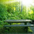 Bench in Forest — Stockfoto