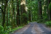 Forest Road North California — Stock Photo