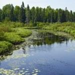 Minnesota Wilderness — Stock Photo #29258885