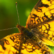 Butterfly Closeup — Stock Photo
