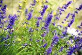 Wildflowers of Minnesota — Stock Photo