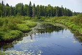 Minnesota Wilderness — Stock Photo