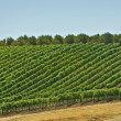Stock Photo: Vineyard Hills
