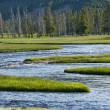 Yellowstone Wilderness — Stock Photo