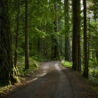 Summer Forest Road — Stock Photo #32370045