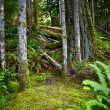 Oregon Forest — Stock Photo