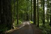 Summer Forest Road — Stock Photo