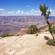 Geology of Grand Canyon — Stok Fotoğraf #36152191