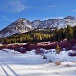 Colorado Scenery — Stock Photo #36152447