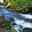 Stock Photo: Small Mossy Creek