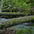 Stock Photo: Natural Wood Bridges