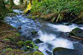 Small Mossy Creek — Stock Photo