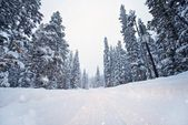 Scenic Winter Road — Stock Photo