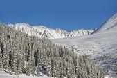 Winter Land — Foto de Stock