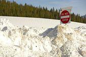 Under Heavy Snow — Stock Photo