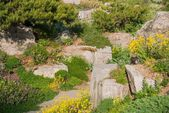 Summer Rockery Garden — Stock Photo