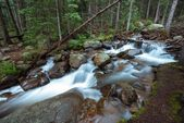 Deep Colorado Forest River — Stock Photo