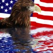 Bald Eagle in guarding American Flag — Stock Photo #6968122