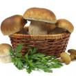 Mushrooms — Stockfoto