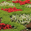 Flowerbed — Stock Photo #21898347