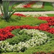 Flowerbed — Stockfoto #22189621