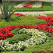 Stockfoto: Flowerbed