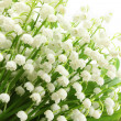 Lily of the valley. — Stock Photo