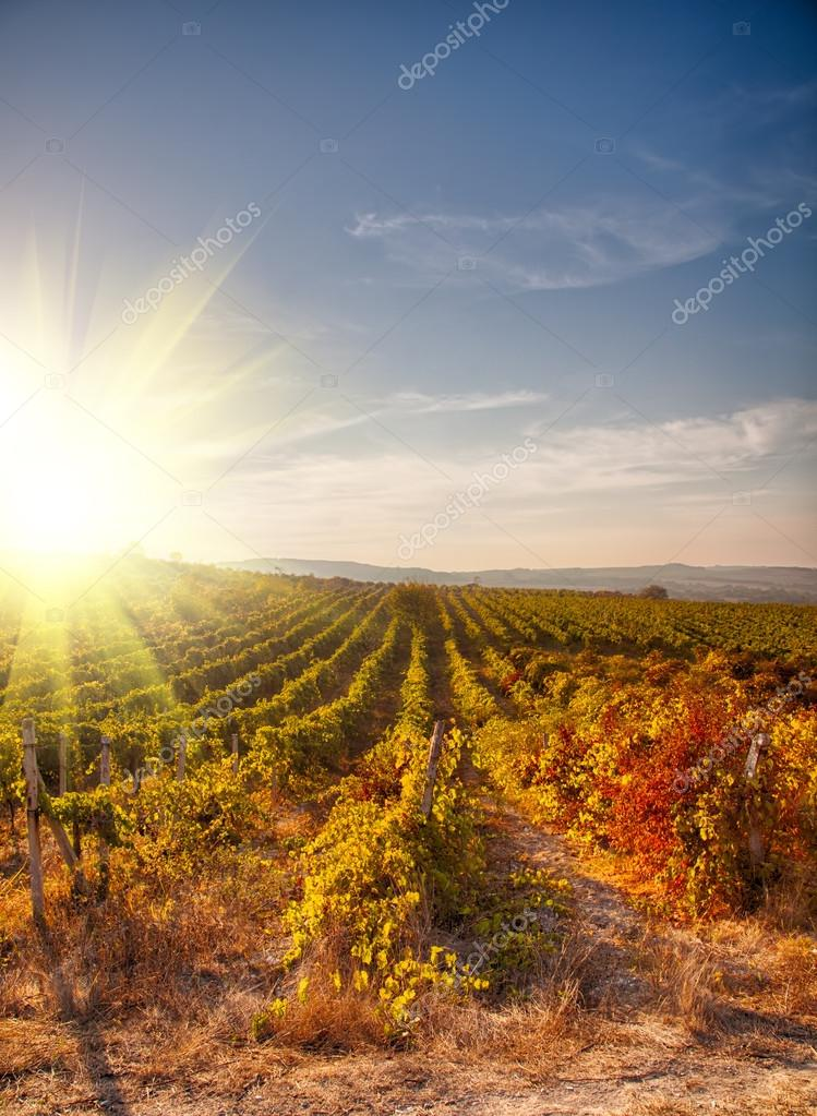 A wine vineyard in France. � Stock Photo � moscowbear #23081484