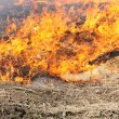 Stock Photo: In wood dry grass burns