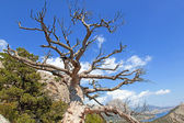 Dead dry tree against the sky — 图库照片