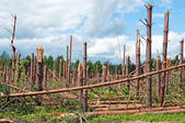 The broken trees after powerful hurricane — Stock Photo