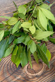 Branch of laurel bay leaves on a wooden board — Stock Photo
