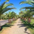 Palm avenue in a city of Alanya — Stock Photo