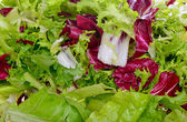 Salad mix with rucola, frisee, radicchio and lettuce — Stok fotoğraf