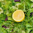 Stock Photo: Salad mix with rucola, frisee, radicchio and lettuce