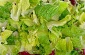 Salad mix with rucola, frisee, radicchio and lettuce — Stock Photo