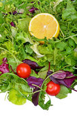 Salad mix with rucola, frisee, radicchio and lettuce — Foto Stock