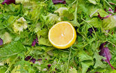 Salad mix with rucola, frisee, radicchio and lettuce — Stockfoto