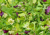 Fresh salad leaves assortment closeup for background — Stockfoto