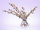 Branches of the pussy willow with flowering bud in jug — Stock Photo