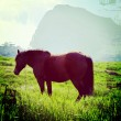 Horse on a summer pasture — Stock Photo #39610977